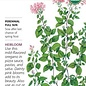 Seed Oregano Common Organic Heirloom - Origanum vulgare