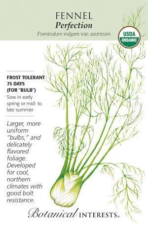 Seed Fennel Florence Perfection Organic - Foeniculum vulgare var. azoricum