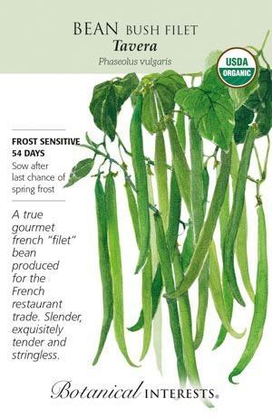 Seed Bean Bush French Tavera Organic - Phaseolus vulgaris