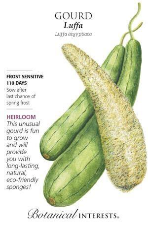 Seed Gourd Luffa Heirloom - Luffa aegyptiaca