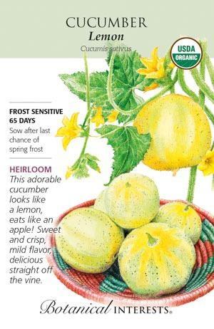 Seed Cucumber Lemon Organic Heirloom - Cucumis sativus