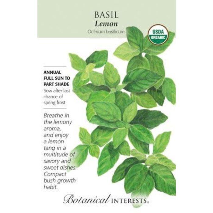 Seed Basil Lemon Organic - Ocimum basillicum