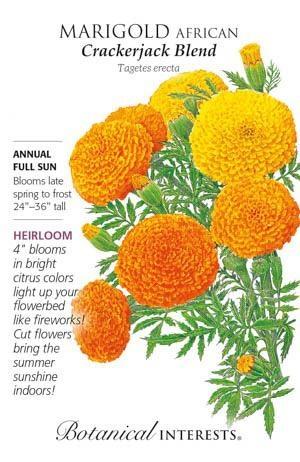 Seed Marigold African Crackerjack Blend Heirloom - Tagetes erecta