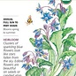 Seed Borage Organic Heirloom - Borago officinalis