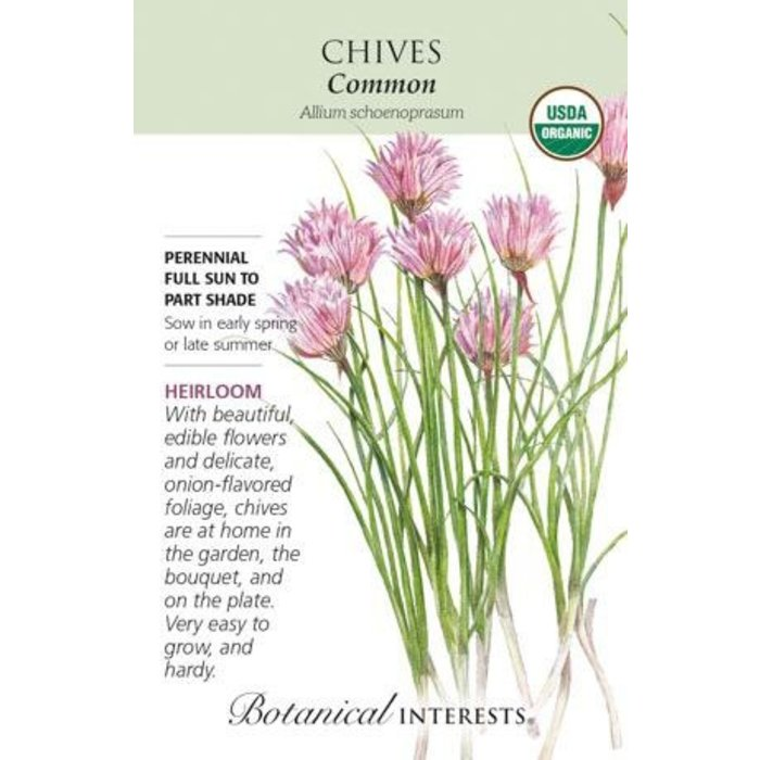 Seed Chives Common Organic Heirloom - Allium schoenoprasum