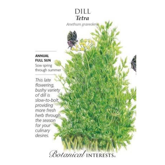 Seed Dill Tetra - Anethum graveolens