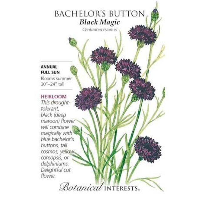 Seed Bachelor Button Black Magic Heirloom - Centaurea cyanus