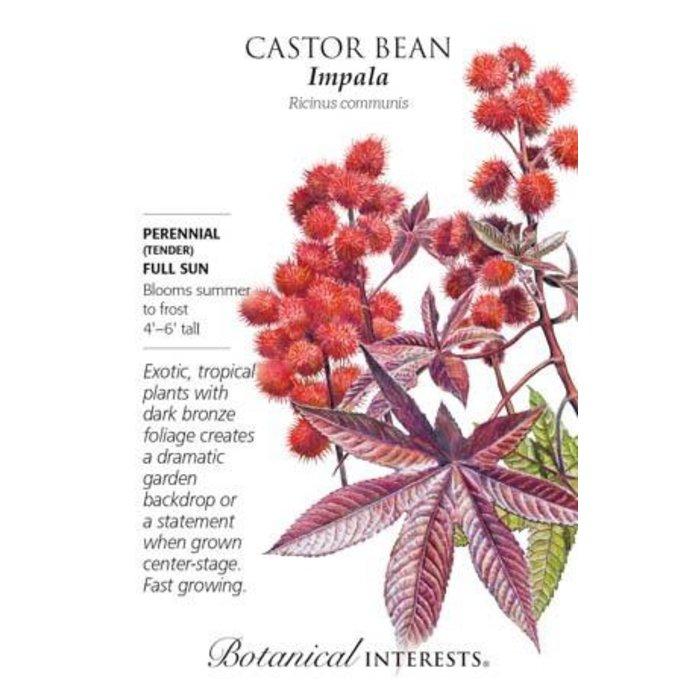 Seed Castor Bean Impala Heirloom - Ricinus communis