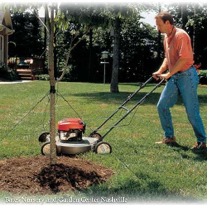 Mow-Over Tree Stake Kit Dalen