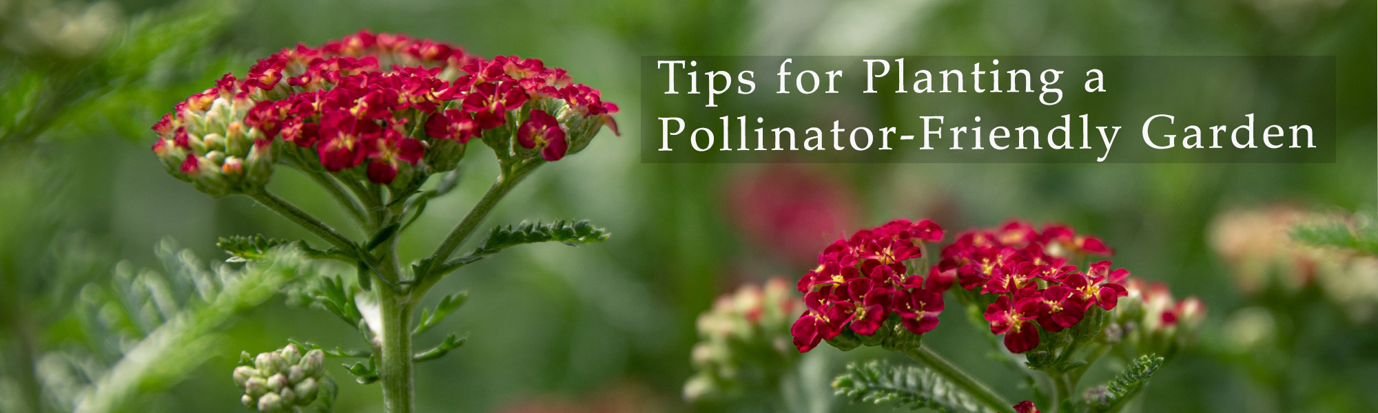 Tips for Planting a Pollinator-friendly garden Tennessee