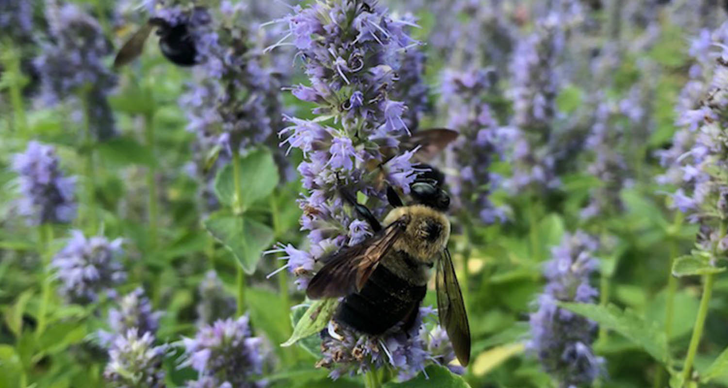 Pollinator-Friendly Plants  for Middle Tennessee