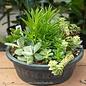 Tropical 10P Moroccan Bowl w/ Succulent Combo