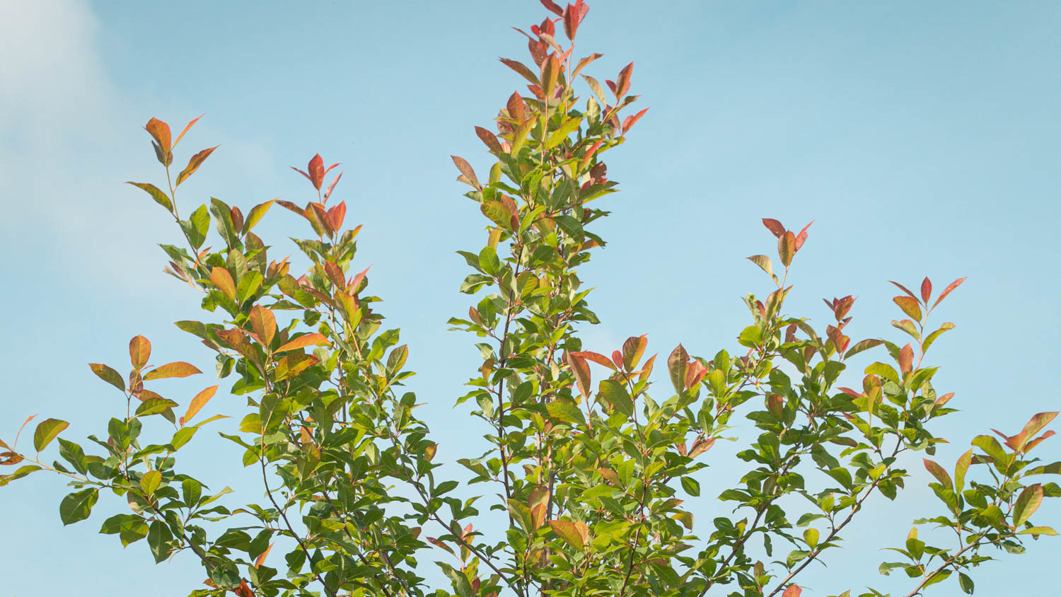 how to plant a tree in the summer