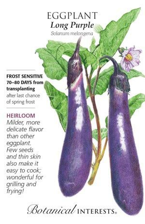 Seed Eggplant Long Purple Heirloom - Solanum melongena