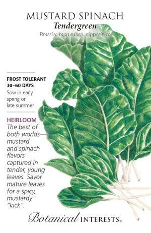 Seed Mustard Spinach Tendergreen Heirloom - Brassica rapa subsp. nipposinica