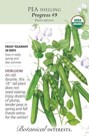 Seed Pea Shelling Progress #9 Organic Heirloom - Pisum sativum