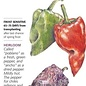 Seed Pepper Chile Poblano/Ancho Heirloom - Capsicum annuum