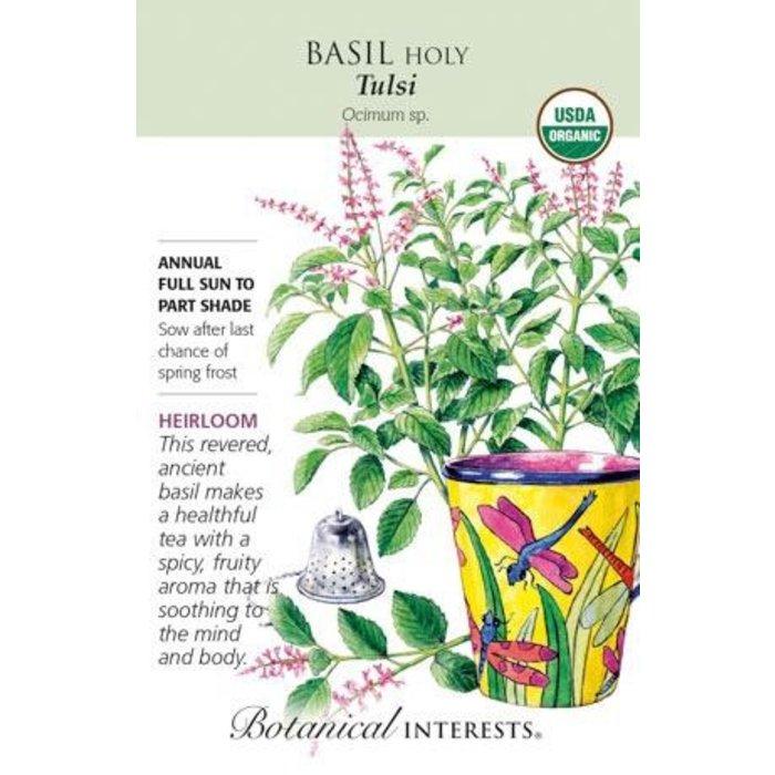 Seed Basil Holy Tulsi Organic Heirloom - Ocimum sp.