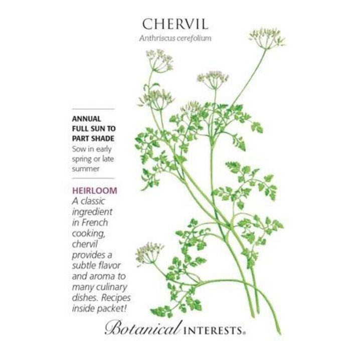 Seed Chervil Heirloom - Anthriscus cerefolium