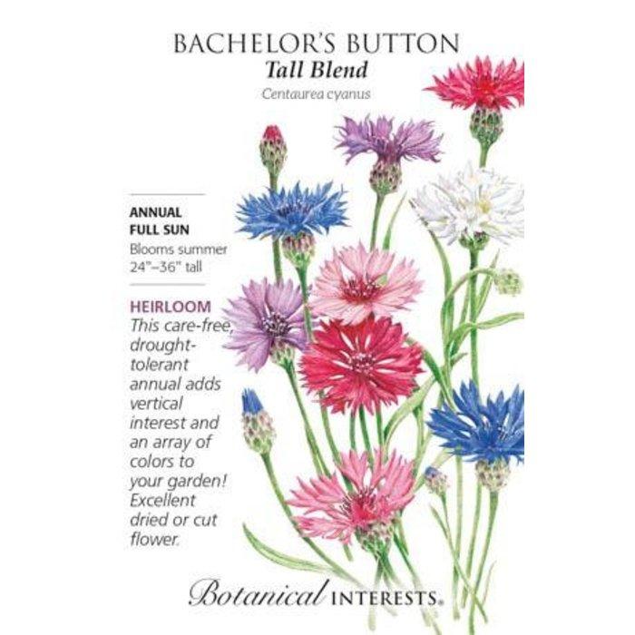 Seed Bachelor Button Tall Blend Heirloom - Centaurea cyanus
