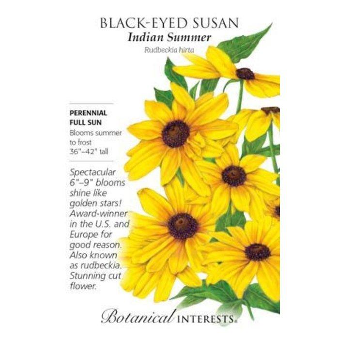 Seed Black-Eyed Susan Indian Summer