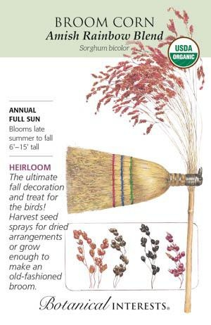 Seed Broom Corn Amish Rainbow Organic Heirloom - Sorghum bicolor