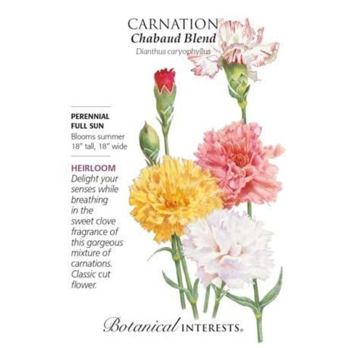 Seed Carnation Chabaud Blend Heirloom - Dianthus caryophullus