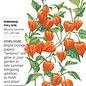 Seed Chinese Lantern Heirloom - Physalis alkekengi