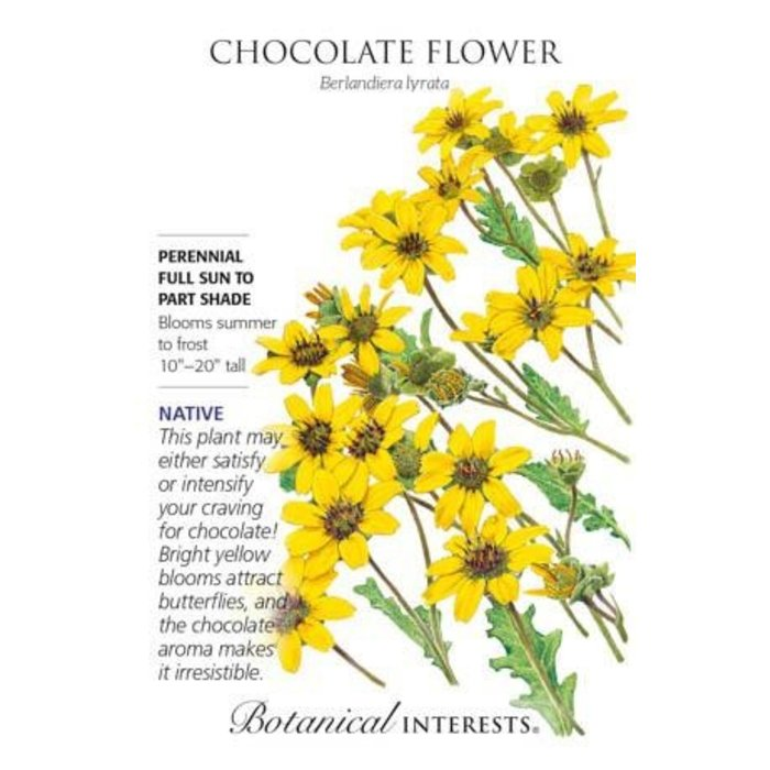 Seed Chocolate Flower Heirloom Native - Berlandiera lyrata