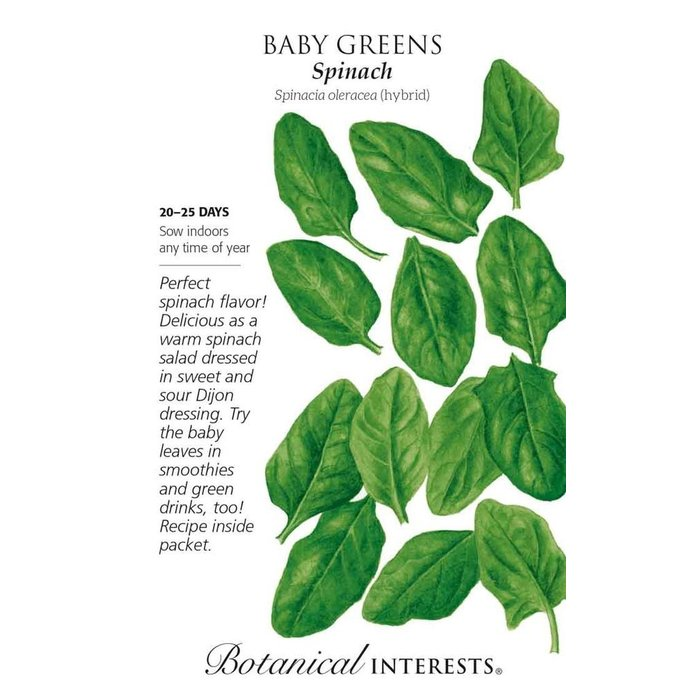 Seed Baby Greens Spinach - Spinacea oleracea (hybrid) - Lrg Pkt