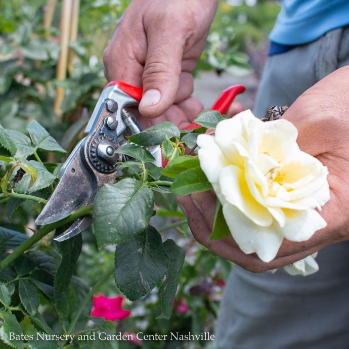 Pruning: What to Snip and What to Skip-Summer Pruning for Trees, Shrubs, and Perennials