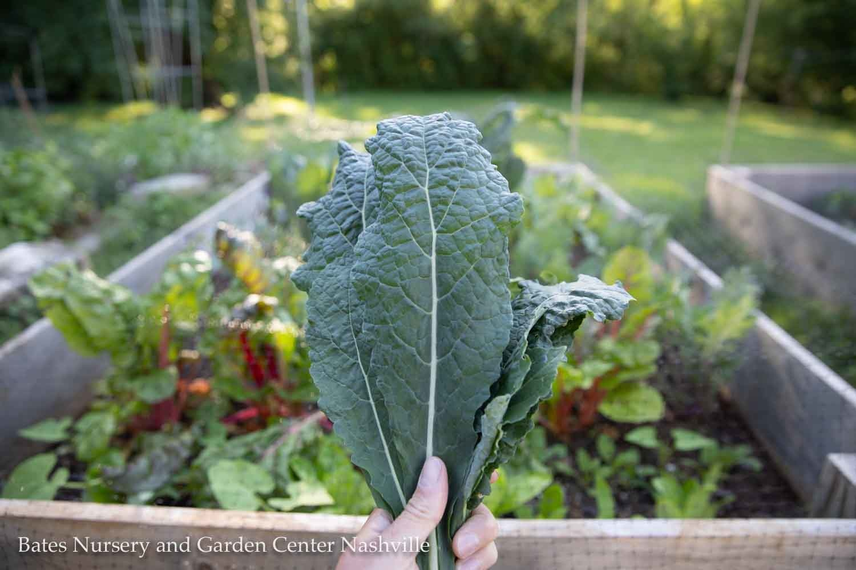 Fall Gardening 101: Planning a Productive Vegetable Garden