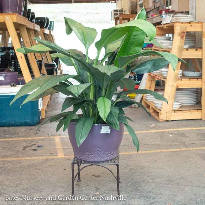 Plant Stands/Hooks/Brackets