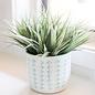 Pot Alexa White w/Green Decor & Green Interior 5x5