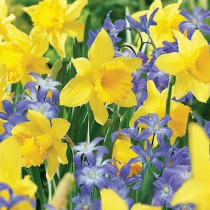 Bulb Blend Narcissus Deer Resistant  35/pk