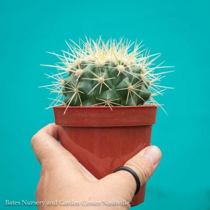 3.25p! Cactus Golden Barrel /Tropical