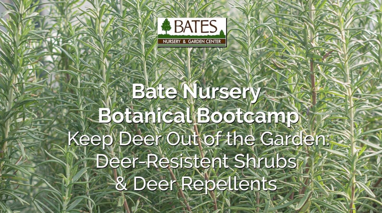 Keep Deer Out of Your Garden-Deer Resistant Plants & Deer Repellent Methods