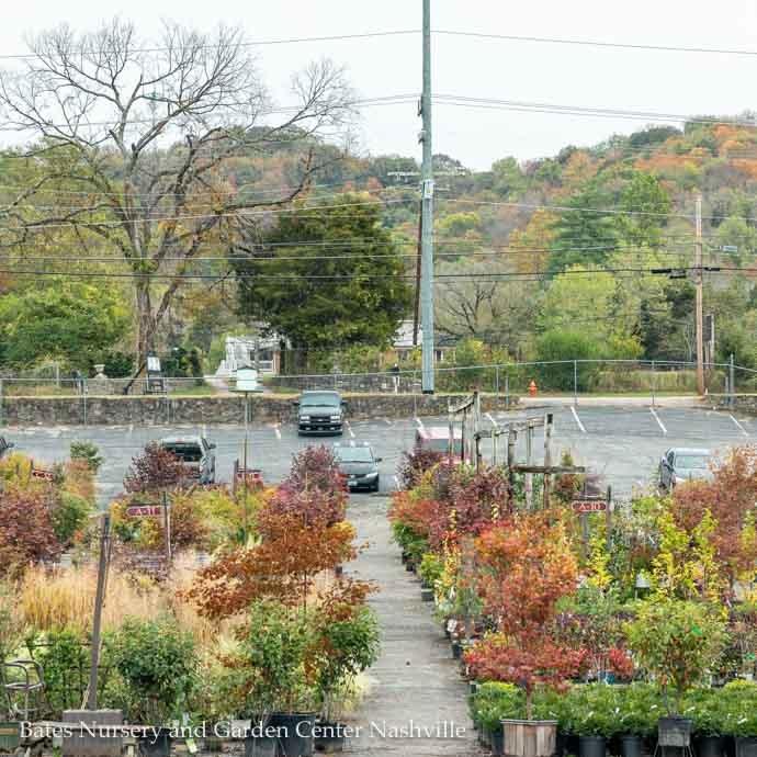 Technicolor Treescape