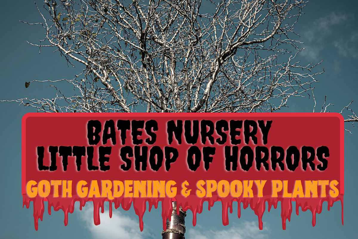 Bates Nursery Little Shop of Horrors