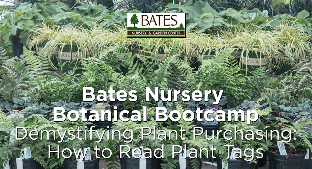 Demystifying Plant Purchasing: How to Read Plant Tags
