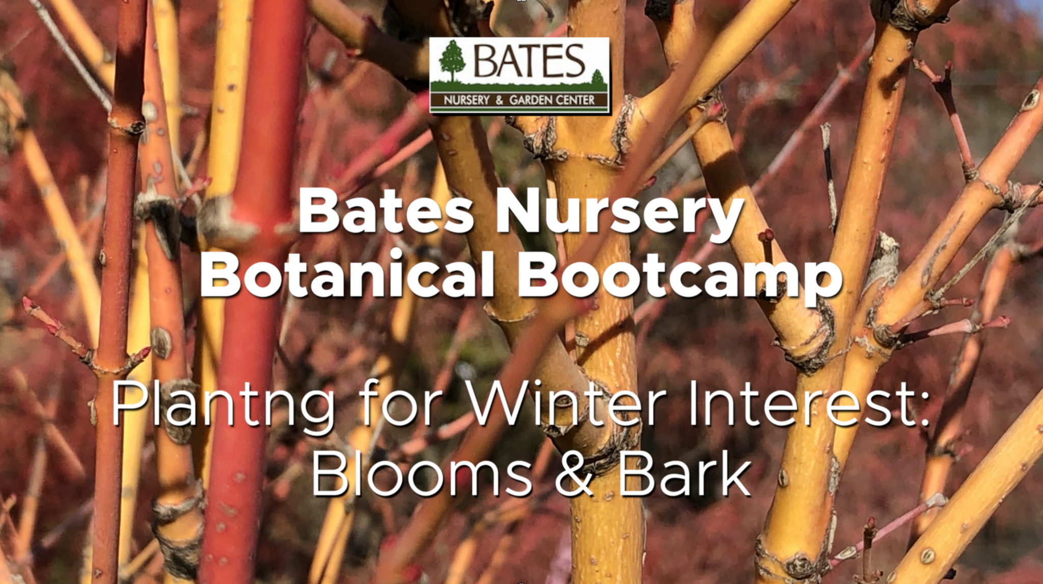 Planting for Winter Interest: Blooms and Bark