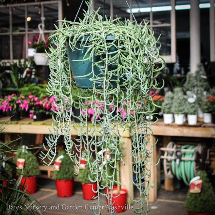 10Hb! Fish Hooks String Succulent Hanging Basket /Tropical