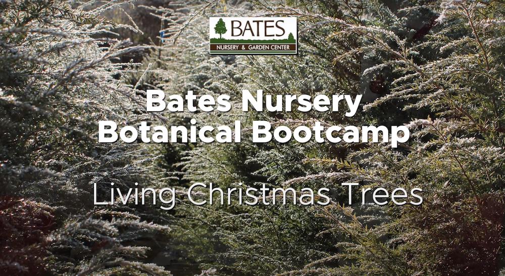 Living Christmas Trees!