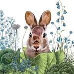 Chou Chou Bunny Serviettes