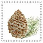 PPD Pine Cone Nature Lunch Serviette