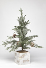 Harman Potted Fir Tree