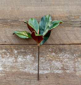 Park Hill Magnolia Leaves Pick