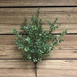 Tri W Imports Boxwood Bush Spray