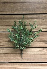 Tri W Imports Boxwood Bush Spray (Tri)