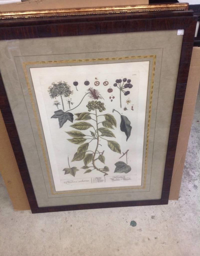 Paragon Vintage Foliage II